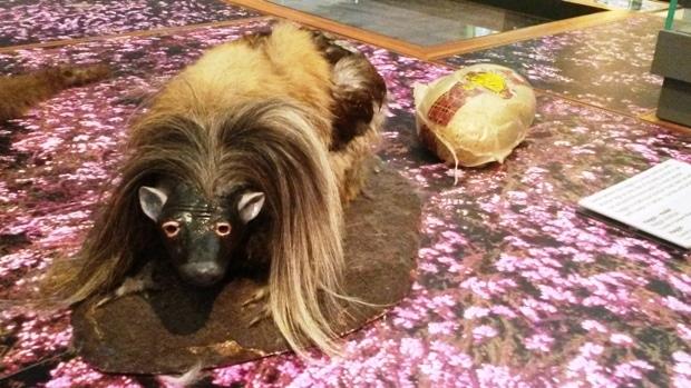 haggis au kelvin grove museum
